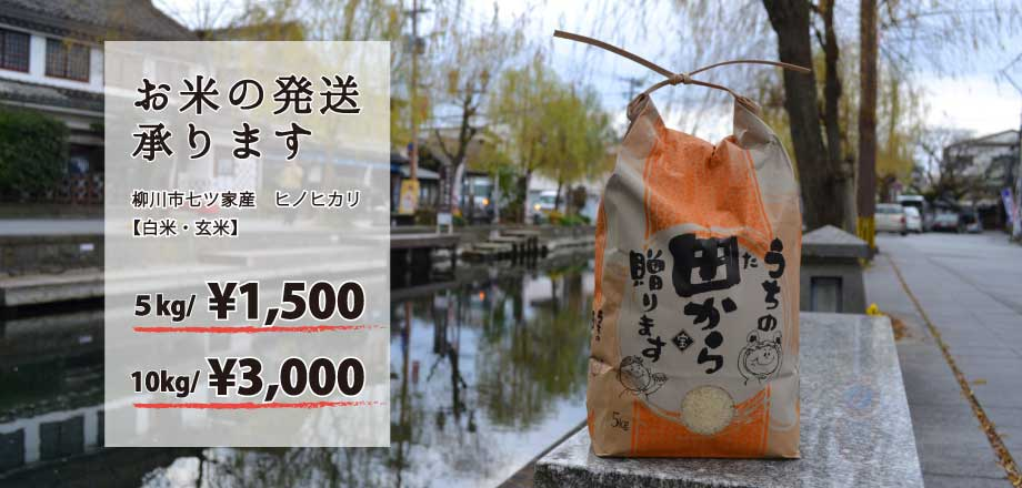 We can ship our special Hinohikari rice.